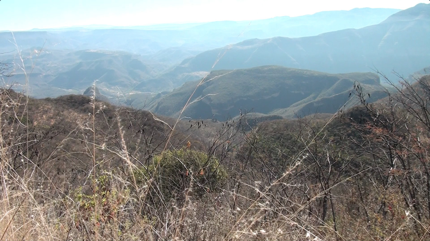 Huichol Deer Repopulation Project Report, Spring 2016