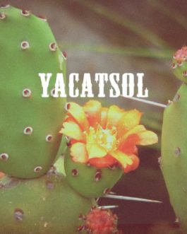 Donate to the Yacatsol project