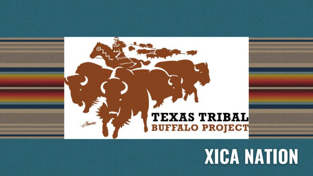 Read more about the article Texas Tribal Buffalo Project: Reoccupation…A Coming Home